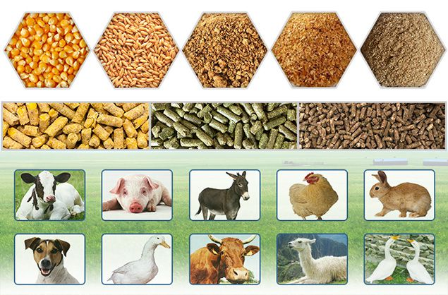 feed mill for poultry feed processing
