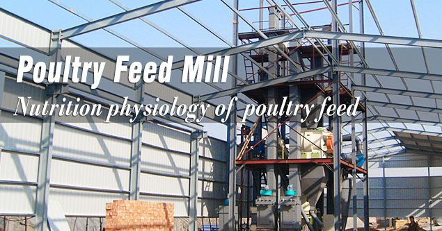 nutrition tips for poultry feed production plant owners