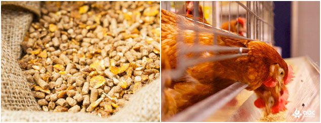 poultry feed production Industry in Japan