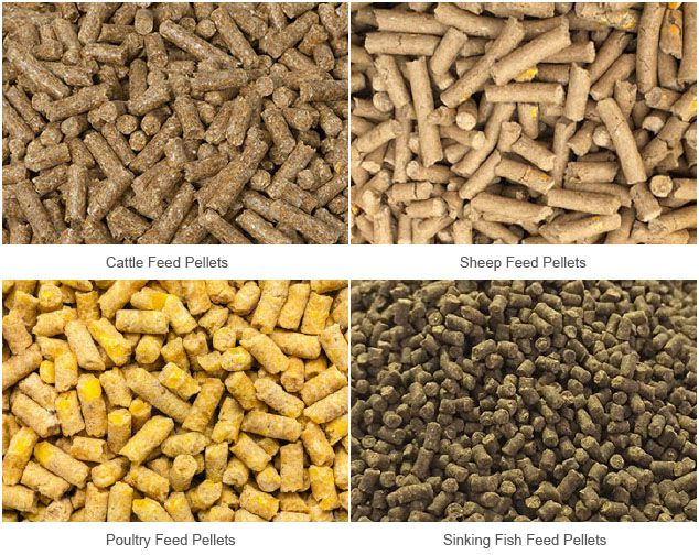 cattle and poultry feed manufacturing process