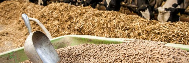 cattle feed pellet production project cost