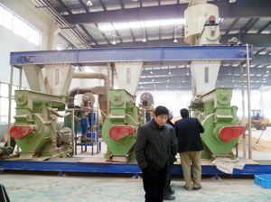 5TPH Complete Wood Pellet Energy Production Line in Vietnam