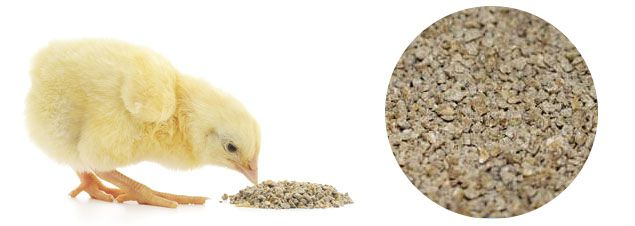 make crumbled feed pellet for chickens