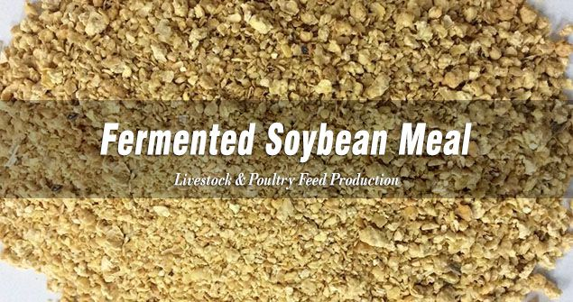 Fermented Soybean Meal for Animal Feed Making