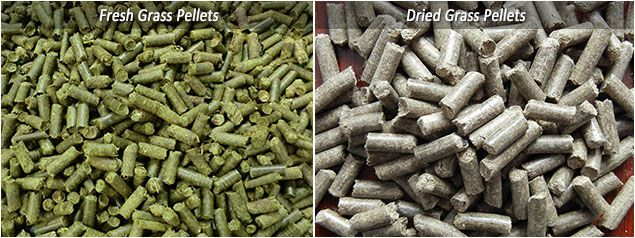 fresh grass pellets vs dried grass pellets