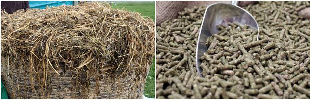 make grass feed pellets for cattle, horse and sheep