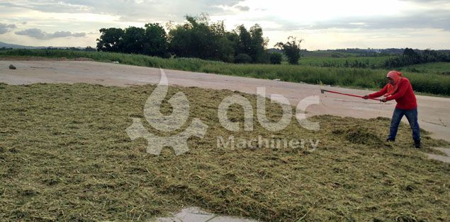 grass sun dry field of the biofuel pellet plant