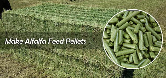 make alfalfa hay pellets as animal feed