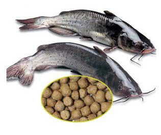 make catfish feed pellets