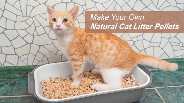 make your own natural cat litter pellets