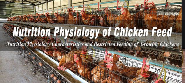nutrition physiology of chicken feed