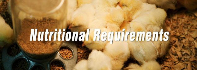 nutritional requirements of poultry feed for poultry cub