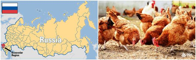 poultry feed industry in Russia