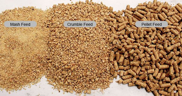 poultry feed mash crumble pellet