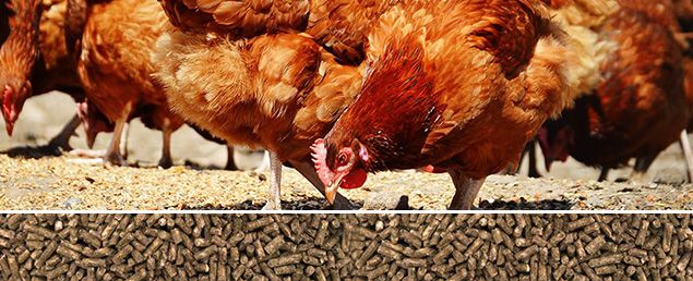 Poultry Feed Machinery Distributor In China Low Cost