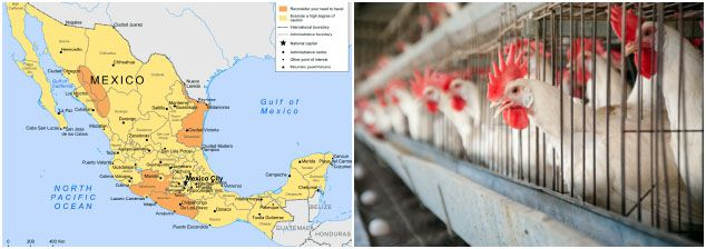 poultry feed processing in Mexico