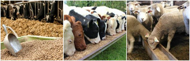 ruminant animal feed production business plan