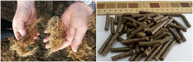 turn oil palm fiber into biomass pellets